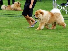 Hundeudstilling-i-Horne-3.-og-4.-august-2019-22