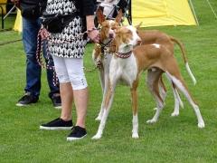 Hundeudstilling-i-Horne-3.-og-4.-august-2019-28