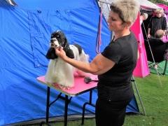 Hundeudstilling-i-Horne-3.-og-4.-august-2019-7